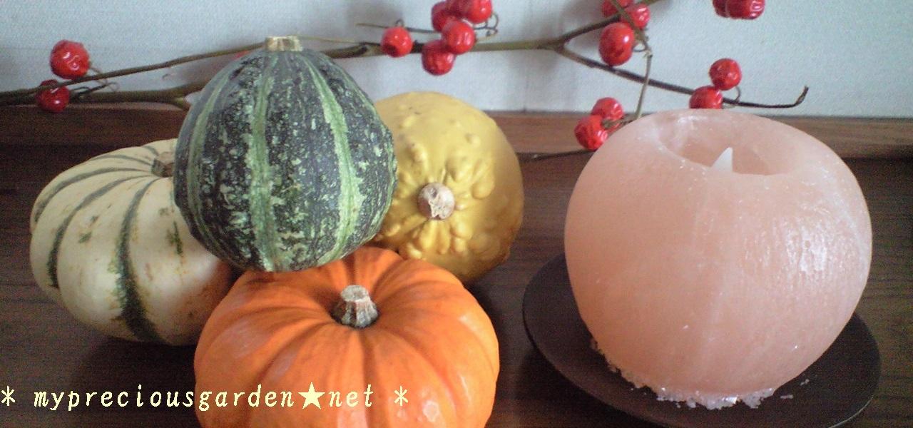 ☆秋の植物・お庭☆