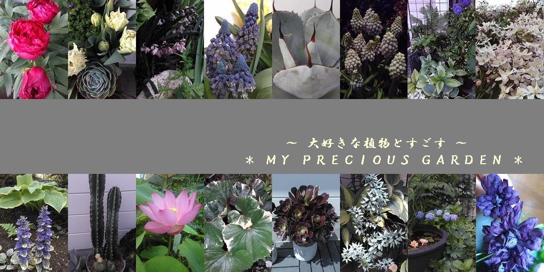 * my precious garden * ~ 大好きな植物とすごす ~ マイプレシャスガーデン