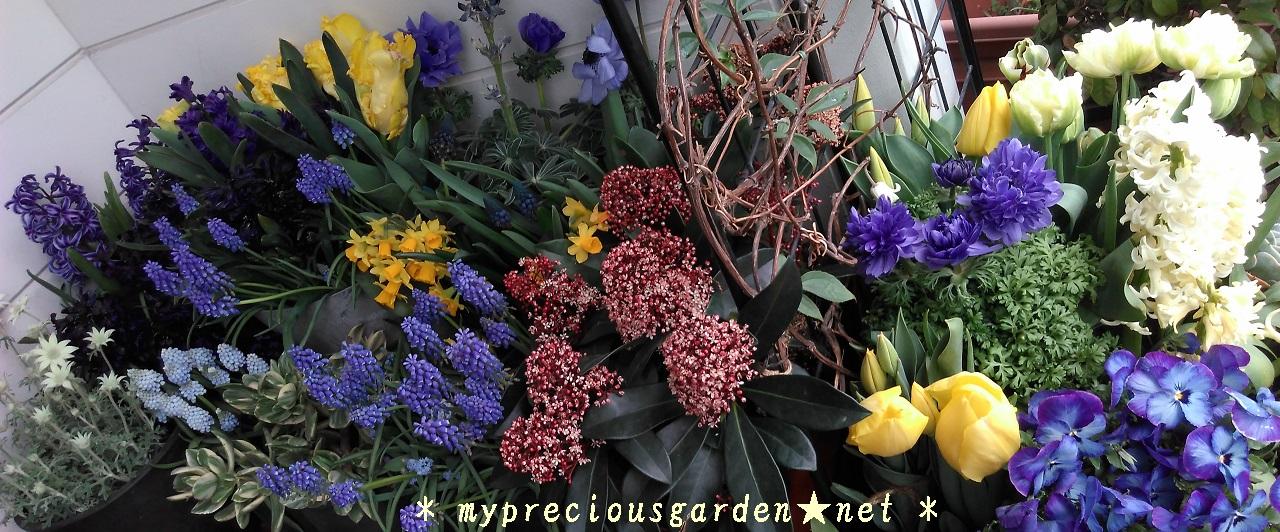 ☆春先の植物・お庭☆