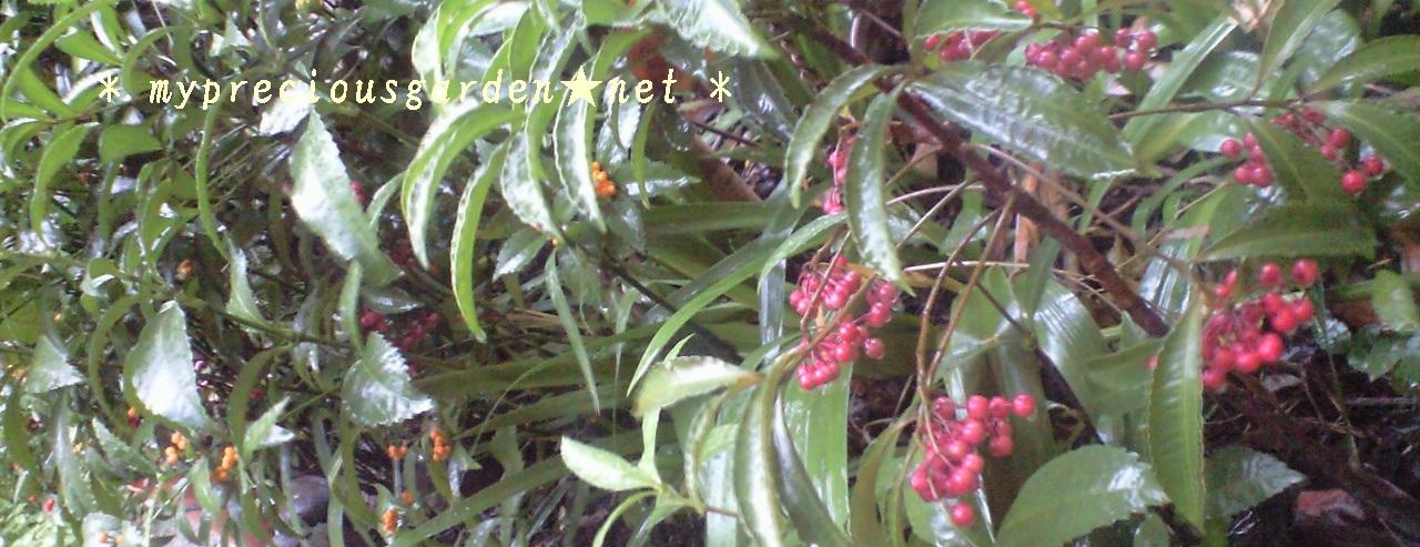 ☆冬の植物・お庭☆